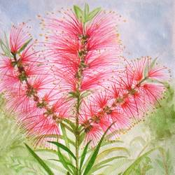 bottle brush, 9 x 13 inch, neeraj parswal,flower paintings,paintings for living room,thick paper,watercolor,9x13inch,GAL094868