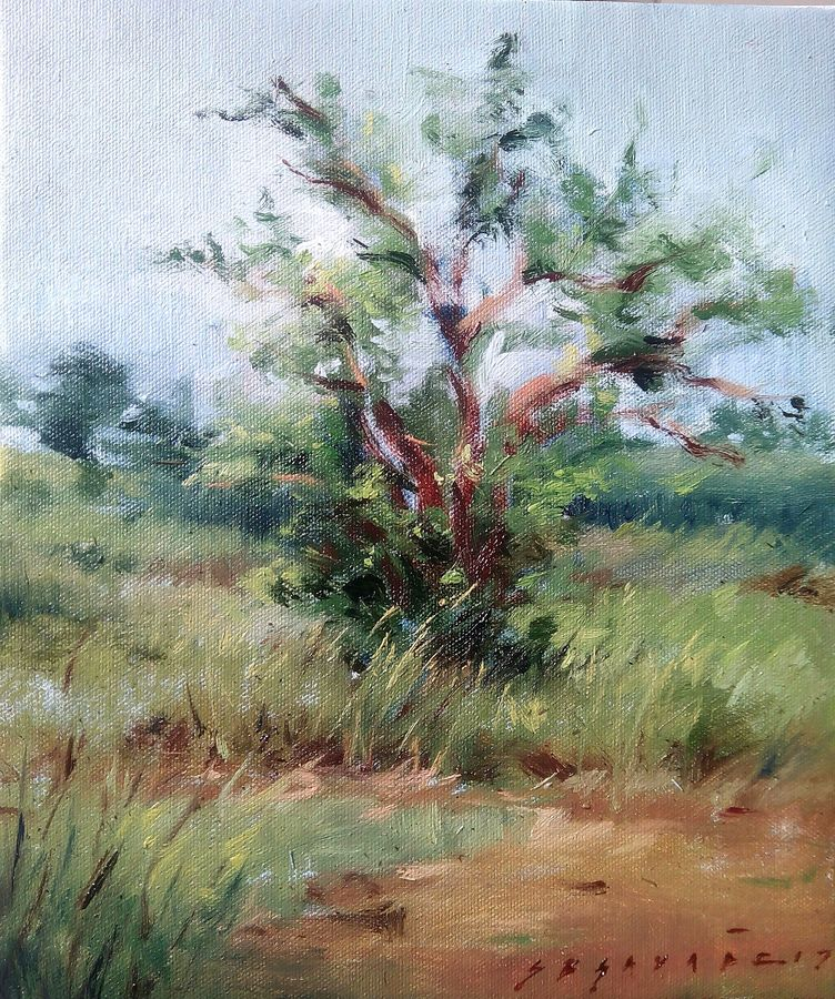 fullscape, 10 x 12 inch, siddharth gavade,nature paintings,paintings for office,canvas,oil,10x12inch,GAL018715163Nature,environment,Beauty,scenery,greenery