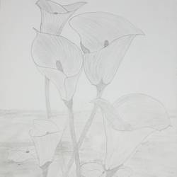 flower of water, 9 x 11 inch, mrs. kalyani lahon,fine art drawings,paintings for dining room,drawing paper,pencil color,9x11inch,GAL06575420