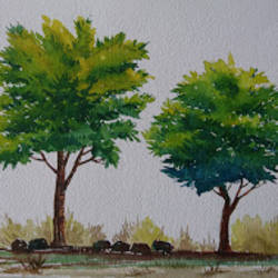 trees, 12 x 8 inch, mahendra shewale,nature paintings,paintings for living room,handmade paper,watercolor,12x8inch,GAL018725465Nature,environment,Beauty,scenery,greenery