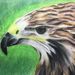 sharp focus, 15 x 11 inch, harshit mall,wildlife paintings,paintings for living room,thick paper,pastel color,15x11inch,GAL021915915