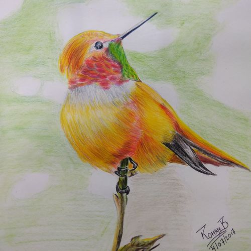 bird on tree, 12 x 12 inch, rohan basak,wildlife paintings,paintings for bedroom,drawing paper,pencil color,12x12inch,GAL022185986