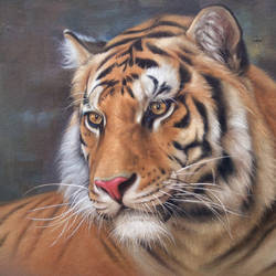 terrifying majestic, 12 x 16 inch, gopi verma,wildlife paintings,paintings for office,canvas,oil,12x16inch,GAL0296626