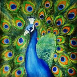 peacock, 22 x 22 inch, neha gupta,animal paintings,paintings for living room,drawing paper,acrylic color,22x22inch,GAL023466290
