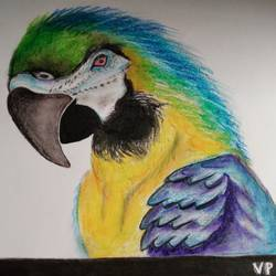 parrot the, 12 x 16 inch, vp singh,paintings for living room,animal paintings,cartridge paper,mixed media,12x16inch,GAL024886499