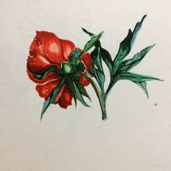 scarlet, 7 x 8 inch, mardvi patel,flower paintings,paintings for living room,cartridge paper,watercolor,7x8inch,GAL025816804
