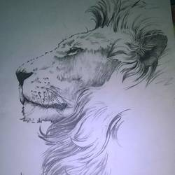the lion king , 18 x 24 inch, mohammed  mohsin ,figurative drawings,paintings for living room,paper,pencil color,18x24inch,GAL027406972