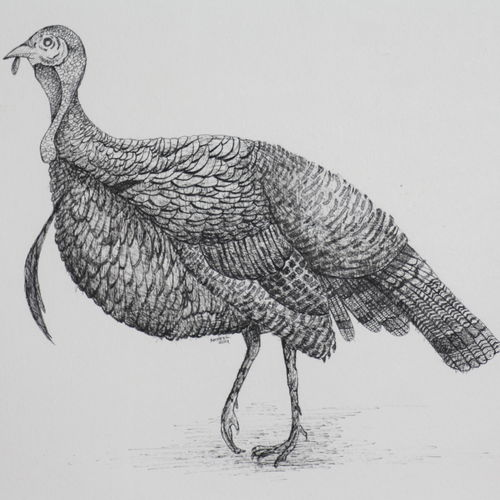 turkey 1 (pen and ink), 20 x 17 inch, syed akheel,fine art drawings,paintings for living room,canson paper,pen color,20x17inch,GAL011357244