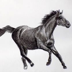 black horse, 12 x 8 inch, ram kumar,realism drawings,paintings for office,horse paintings,brustro watercolor paper,charcoal,12x8inch,GAL027567463