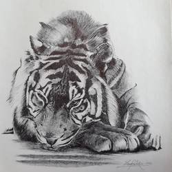 tiger (wild life), 20 x 30 inch, vinay surtikar,wildlife paintings,paintings for office,paintings for dining room,paintings for living room,animal paintings,paintings for hotel,thick paper,ball point pen,20x30inch,GAL018777493