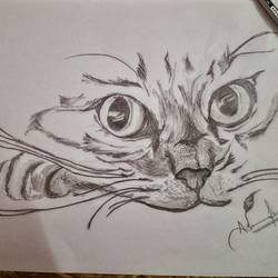 cat sketch, 12 x 9 inch, ashwin khare,portrait drawings,paintings for bedroom,paper,charcoal,12x9inch,GAL032357847