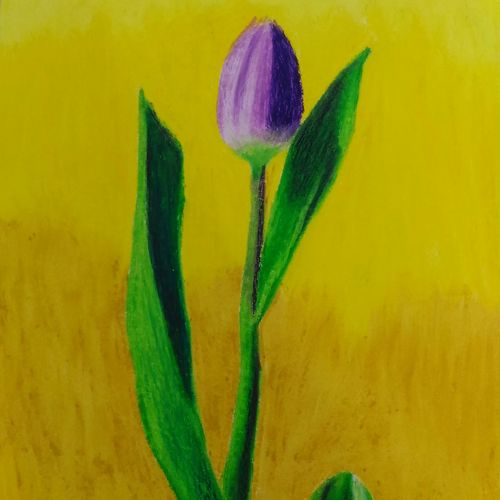 tulip with its bright looks, 11 x 8 inch, sudeshna ballav,flower paintings,paintings for living room,drawing paper,pastel color,11x8inch,GAL032507877