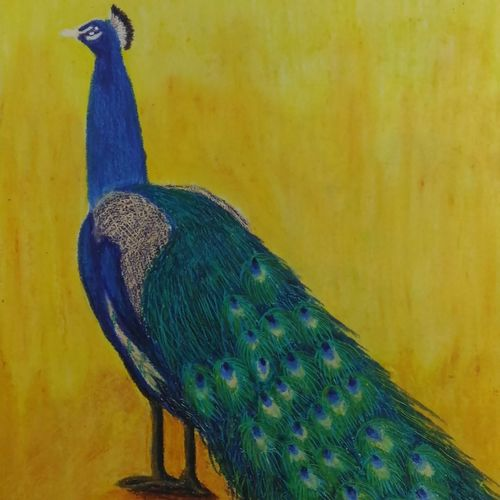the peacock, 14 x 9 inch, sudeshna ballav,paintings for living room,animal paintings,drawing paper,pastel color,14x9inch,GAL032507879