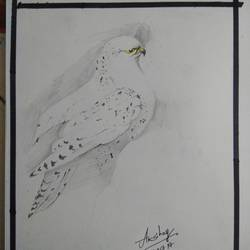 eggle, 8 x 16 inch, akshay sutar,wildlife paintings,paintings for bedroom,drawing paper,pencil color,8x16inch,GAL032667898