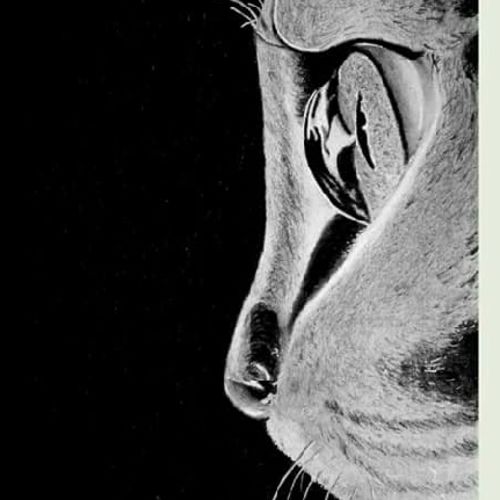 cat, 8 x 12 inch, sonali tompe,illustration drawings,paintings for bedroom,thick paper,charcoal,8x12inch,GAL032317918