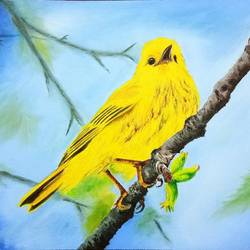 little bird, 12 x 9 inch, cheryl monis,wildlife paintings,paintings for living room,paintings,canvas,oil,12x9inch,GAL032937947
