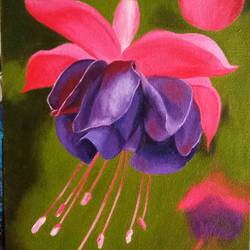 fuchsia flower, 8 x 14 inch, cheryl monis,paintings,flower paintings,canvas,oil,8x14inch,GAL032938001