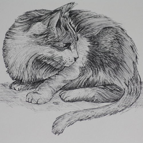 cat life size (pen and ink), 14 x 11 inch, syed akheel,animal paintings,paintings for living room,canson paper,ink color,14x11inch,GAL011358062