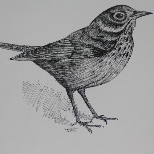 bird life size (pen and ink), 14 x 11 inch, syed akheel,animal paintings,paintings for bedroom,canson paper,ink color,14x11inch,GAL011358065