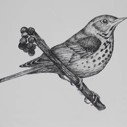 bird on a bush 1(pen and ink), 14 x 11 inch, syed akheel,animal paintings,paintings for bedroom,canson paper,ink color,14x11inch,GAL011358067
