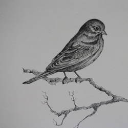 bird on bush 2 (pen and ink), 14 x 11 inch, syed akheel,animal paintings,paintings for bedroom,canson paper,ink color,14x11inch,GAL011358068