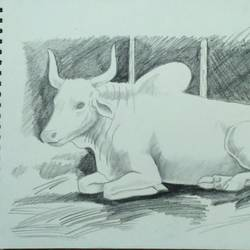imitating ox, 12 x 17 inch, sudhanshu nair,drawings,fine art drawings,paintings for living room,thick paper,graphite pencil,12x17inch,GAL033828084