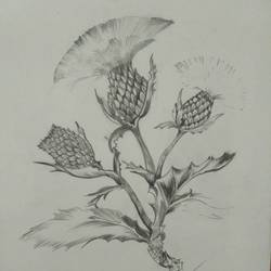 thorns of love, 12 x 17 inch, sudhanshu nair,drawings,realism drawings,paintings for bedroom,thick paper,graphite pencil,12x17inch,GAL033828086