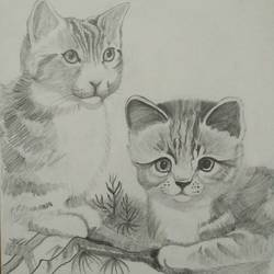 cuddling cats, 12 x 17 inch, sudhanshu nair,drawings,illustration drawings,paintings for living room,thick paper,graphite pencil,12x17inch,GAL033828089