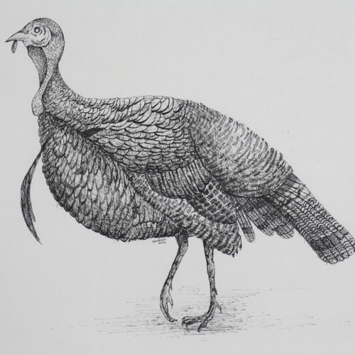 turkey2 (pen and ink), 14 x 11 inch, syed akheel,animal paintings,paintings for bedroom,canson paper,ink color,14x11inch,GAL011358095