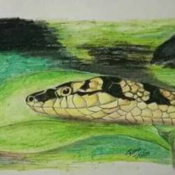 3d snake, 11 x 8 inch, sandeep  rana,drawings,abstract drawings,rice paper,acrylic color,11x8inch,GAL033878101