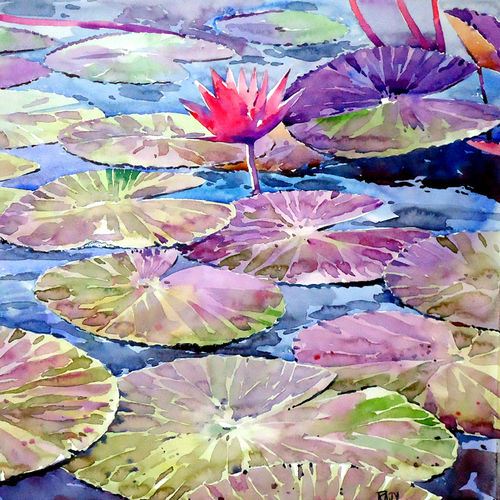 water lily, 14 x 15 inch, raji p,flower paintings,paintings for living room,canson paper,watercolor,14x15inch,GAL05908148