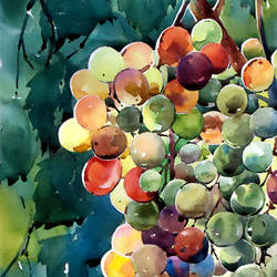 beauty of grapes , 9 x 15 inch, raji p,still life paintings,paintings for dining room,canson paper,watercolor,9x15inch,GAL05908150