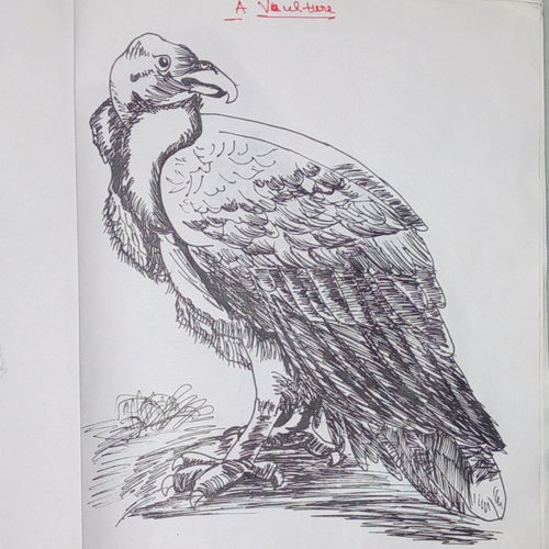 a vulture, 6 x 8 inch, sajid ali khan,drawings,art deco drawings,paintings for living room,thick paper,ink color,6x8inch,GAL035448419