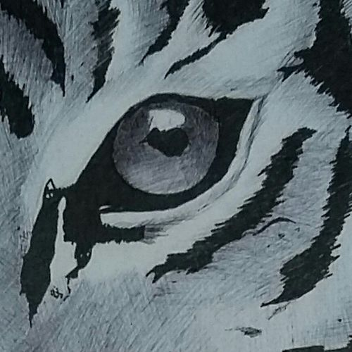 tiger, 17 x 18 inch, naman puri,paintings,realistic paintings,paintings for living room,thick paper,ball point pen,17x18inch,GAL036178519