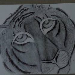 tiger , 11 x 16 inch, sury s,drawings,modern drawings,paintings for bedroom,cartridge paper,pencil color,11x16inch,GAL037108706