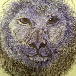 lion, 11 x 16 inch, sury s,drawings,fine art drawings,paintings for bedroom,cartridge paper,pen color,11x16inch,GAL037108735