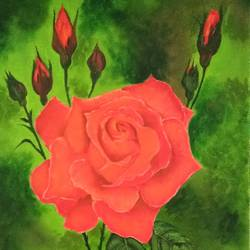 rose, 9 x 12 inch, cheryl monis,paintings,flower paintings,canvas,oil,9x12inch,GAL032939503