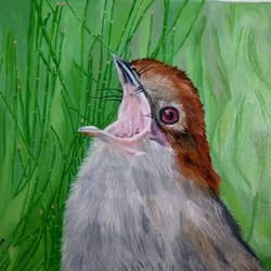 bird, 20 x 16 inch, sujata mohite,paintings,wildlife paintings,paintings for living room,canvas,oil,20x16inch,GAL041929557