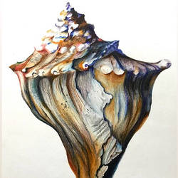 shell, 10 x 12 inch, muskan rana,drawings,photorealism drawings,paintings for living room,ivory sheet,pencil color,10x12inch,GAL037699561