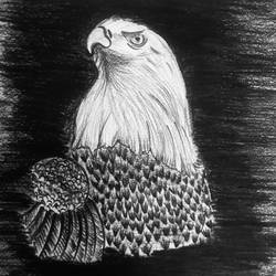 eagle, 8 x 12 inch, manisha ravindra,drawings,fine art drawings,paintings for living room,cartridge paper,charcoal,8x12inch,GAL042579684