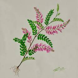 himalayan indigo, 11 x 14 inch, esha lal,paintings,flower paintings,paintings for living room,renaissance watercolor paper,watercolor,11x14inch,GAL043259823