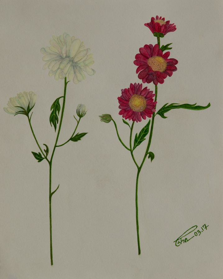 little miss daisies, 8 x 10 inch, esha lal,paintings,flower paintings,renaissance watercolor paper,watercolor,8x10inch,GAL043259830