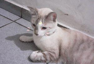 Vou lhe mandar 10 fotos da minha gata