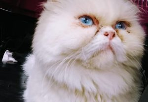 Mando foto da minha gata