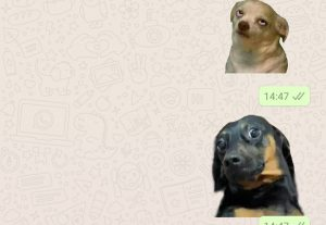 Crio 10 sticks para whatsapp