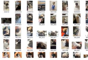 Pack de fotos do meu cãozinho!