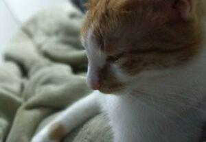 Fotos e vídeos de gatinho