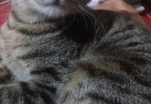 Pack de fotos da minha gatinha