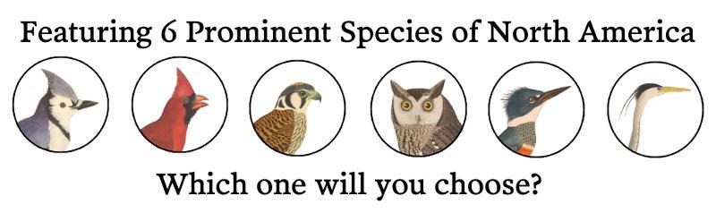 6-Birds.jpg
