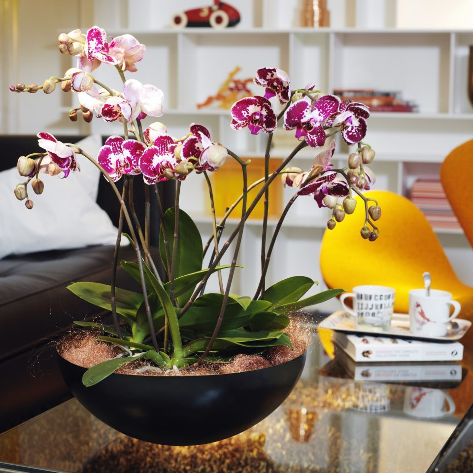 Orchid Bowl For Office